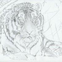 tiger2_600.jpg